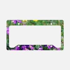 Hairy violet flowers License Plate Holder