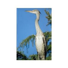 Grey heron perched in a tree Rectangle Magnet