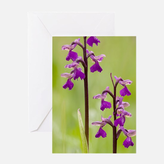 Green-winged orchid (Anacamptis mori Greeting Card