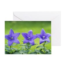 Chinese bellflowers in a row Greeting Card