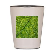 Gunnera plant leaf veins Shot Glass