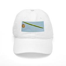 Green alga, light micrograph Baseball Cap