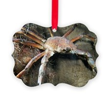 Great spider crab Picture Ornament