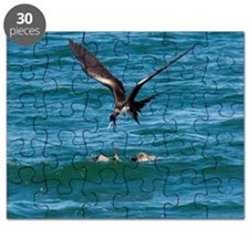 Great frigatebird and blue-footed booby Puzzle