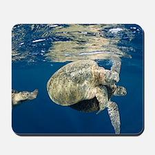 Green turtles mating Mousepad