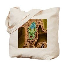 Grass stem, SEM Tote Bag