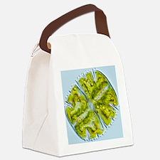 Green alga, light micrograph Canvas Lunch Bag