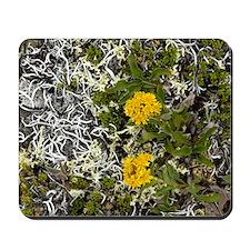 Goldenrod (Solidago multiradiata) Mousepad