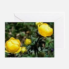 Globe flowers (Trollius europaeus) Greeting Card