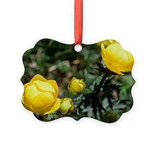 Globe flowers (Trollius europaeus Ornament
