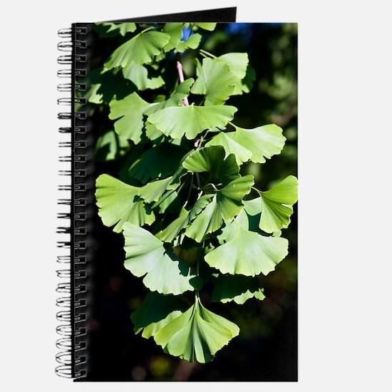 Ginkgo leaves (Ginkgo biloba) Journal