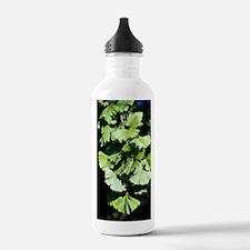 Ginkgo leaves (Ginkgo  Water Bottle