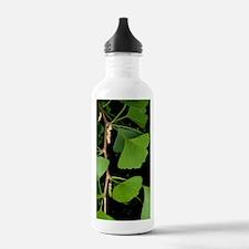 Ginkgo biloba Water Bottle