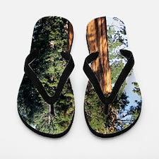 Giant sequoia Flip Flops