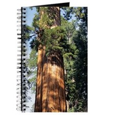 Giant sequoia Journal
