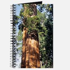 Giant sequoia Journal