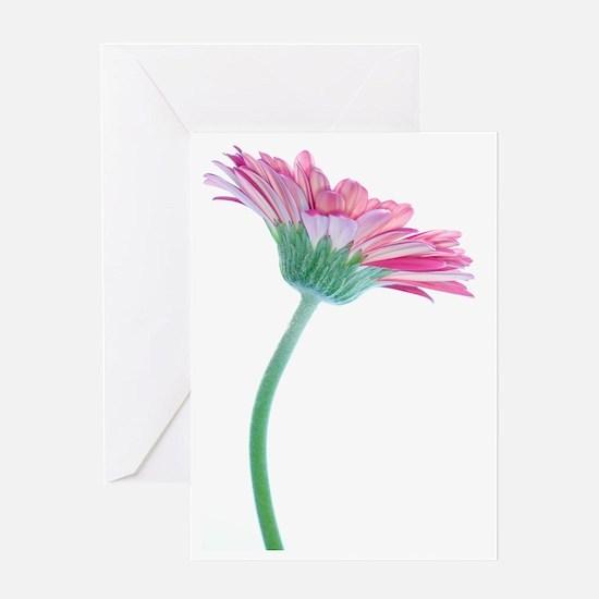 Gerbera (Gerbera sp.) Greeting Card