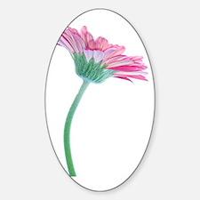 Gerbera (Gerbera sp.) Sticker (Oval)