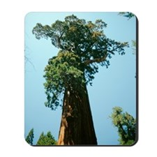 Giant sequoia Mousepad