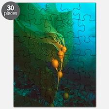 Giant kelp Puzzle