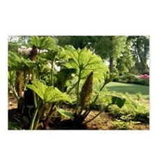 Giant rhubarb (Gunnera ma Postcards (Package of 8)