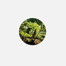 Giant rhubarb (Gunnera manicata) Mini Button
