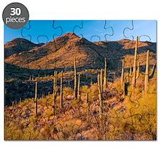 Giant Cactus (Carnegiea gigantea) Puzzle
