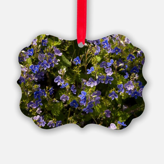 Germander speedwell (Veronica cha Ornament