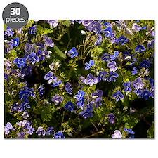 Germander speedwell (Veronica chamaedrys) Puzzle