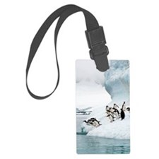 Gentoo penguins jumping into the Luggage Tag