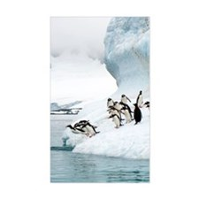 Gentoo penguins jumping into t Decal
