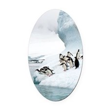 Gentoo penguins jumping into the s Oval Car Magnet