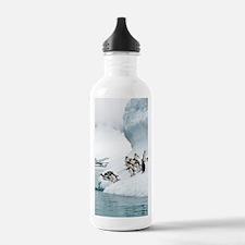Gentoo penguins jumpin Water Bottle