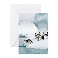 Gentoo penguins jumping into the sea Greeting Card