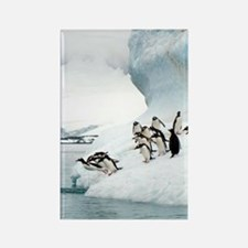 Gentoo penguins jumping into the  Rectangle Magnet