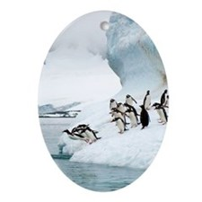Gentoo penguins jumping into the sea Oval Ornament