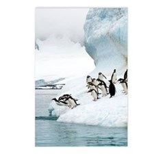 Gentoo penguins jumping i Postcards (Package of 8)