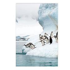 Gentoo penguins jumping i Postcards (Package of 8)