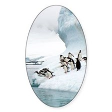 Gentoo penguins jumping into the se Decal