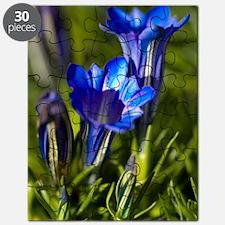 Gentiana sino-ornata 'Blue Sky' Puzzle