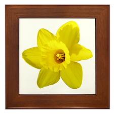 Daffodil Framed Tile