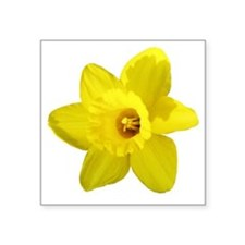 "Daffodil Square Sticker 3"" x 3"""