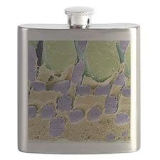 Gecko retina, SEM Flask