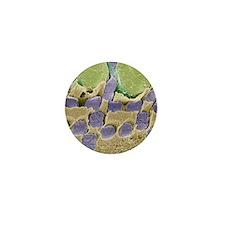 Gecko retina, SEM Mini Button