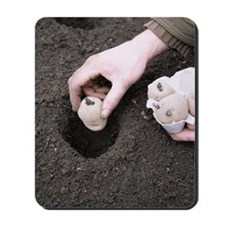 Gardener planting chitted potatoes Mousepad