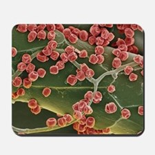 Fungal spores, SEM Mousepad