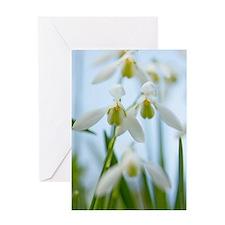 Galanthus nivalis (Snowdrops) Greeting Card