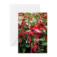 Fuchsia 'Mrs Popple' Greeting Card