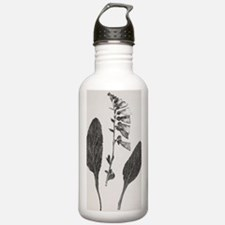 Foxglove, 19th century Water Bottle