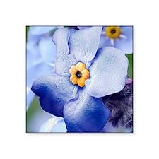 "Forget-me-not flower, SEM Square Sticker 3"" x 3"""